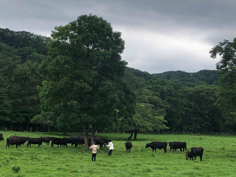牛をめぐる冒険